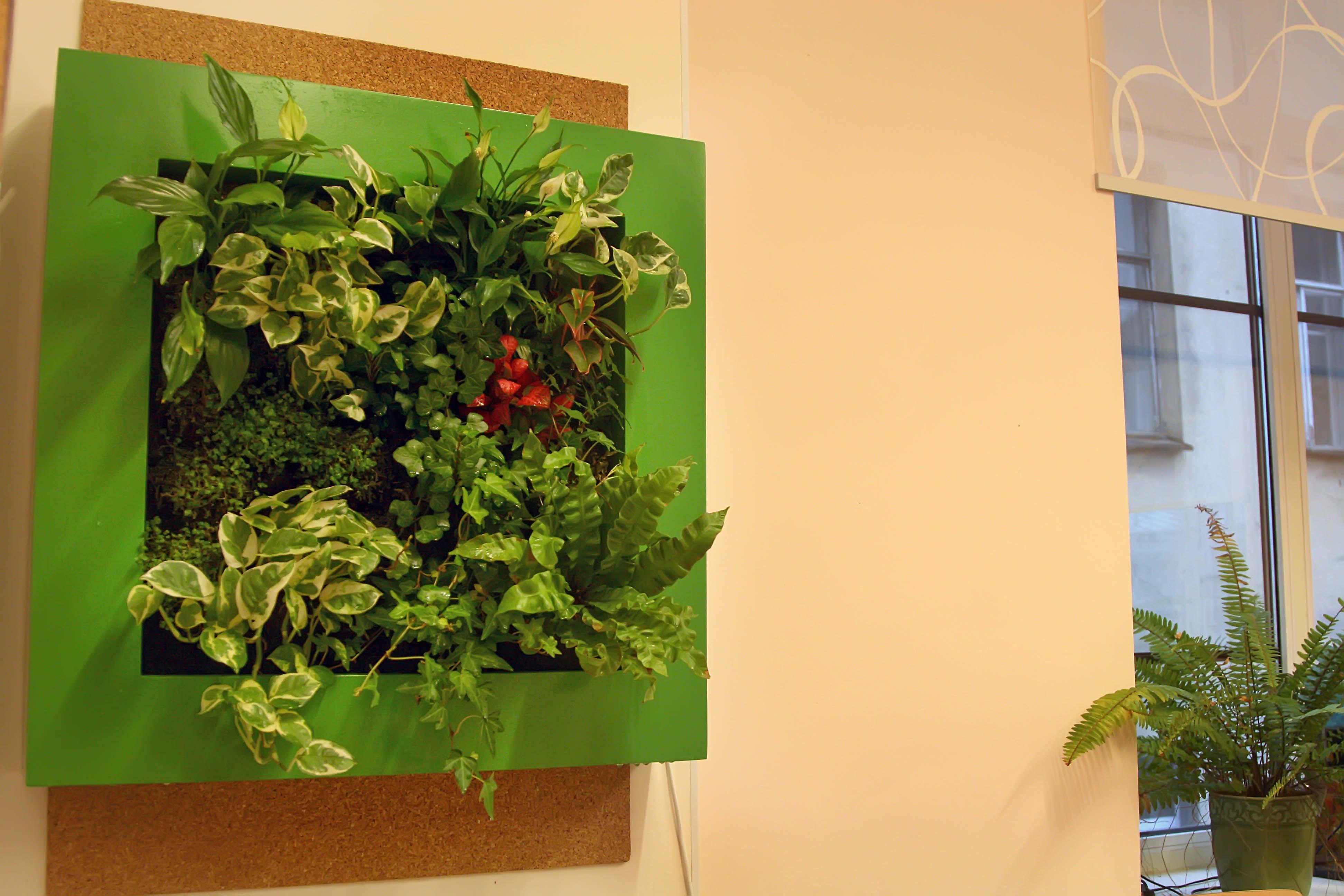 польза от растений в школе